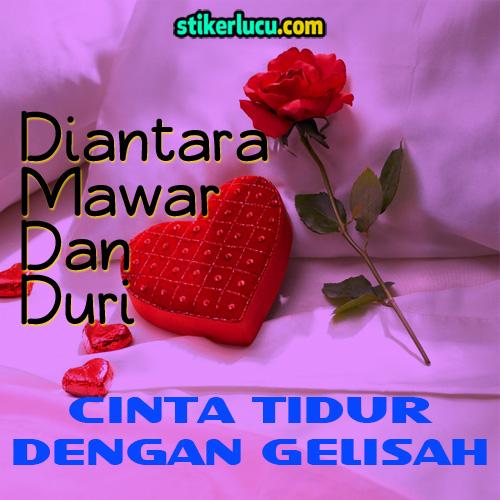 DP BBM Romantis Diantara Mawar Dan Duri